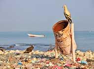 ddl-reati-ambientali-vicino-allapprovazione-le-3-cose-da-sapere.jpg