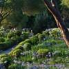 Spazi verdi urbani: visioni per migliorare la disciplina